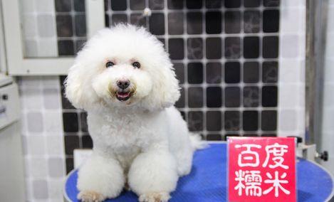 上宠宠物美容(黄金东二路店)
