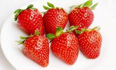 农家人奶油草莓采摘1斤