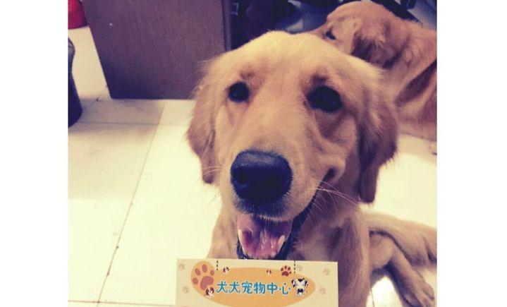 犬犬宠物超市