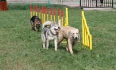 江润宠物乐园小型犬寄养1天