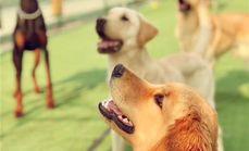 乐享生活幼犬班课程