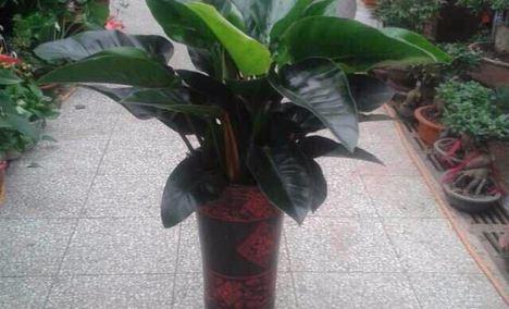 绿植鲜花店