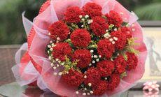 万卉源19支康乃馨花束