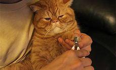萌宠之家宠物猫美容套餐
