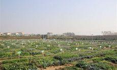 大自然农场小菜园认领托管型