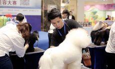 MR.DOG宠物店