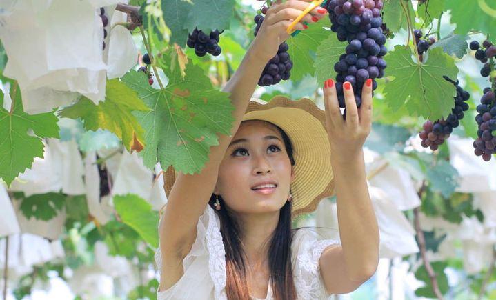 龙尚行生态葡萄园