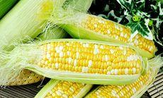 梁家园有机鲜食水果玉米1个