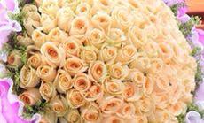 雨花石99朵白玫瑰