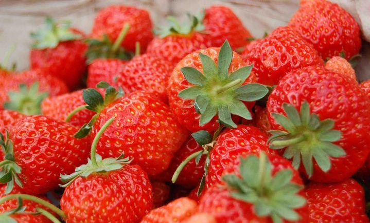 胖哥草莓采摘园
