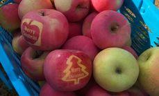 荆坨苹果采摘30斤券