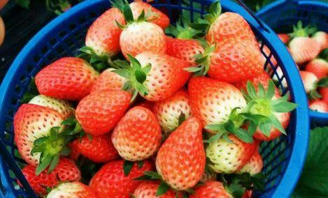 绿农农产品草莓园