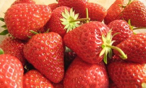 杏花草莓园