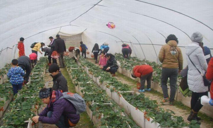 捷农蔬果合作社