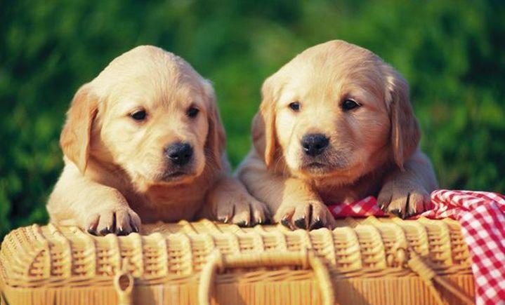 Doghome宠物美容