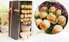 520鲜花19朵玫瑰礼盒