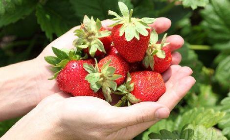 兰月草莓采摘园 - 大图