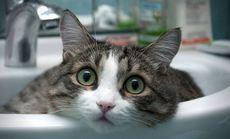 实丽派实猫咪精洗精护套餐