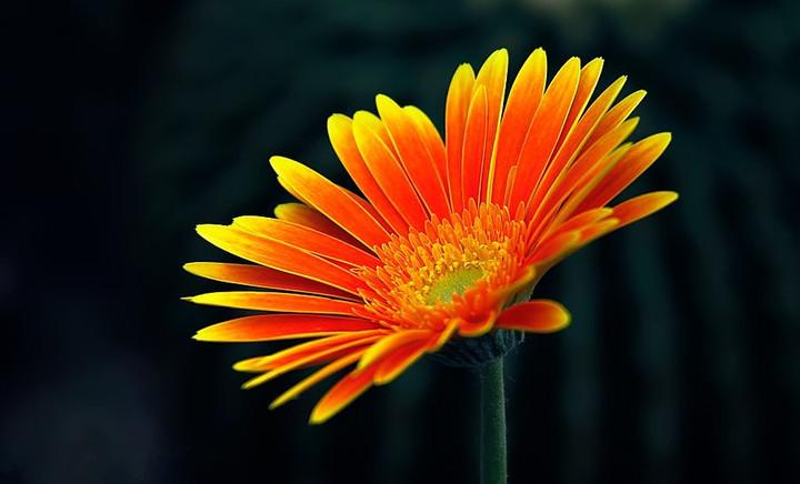 都市芬芳鲜花总汇