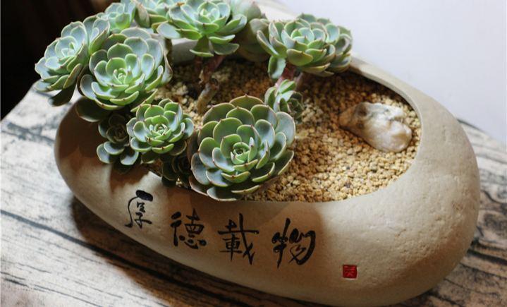 甜蜜之家多肉植物