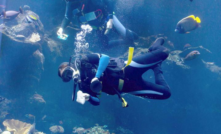 梦幻海洋潜水世界