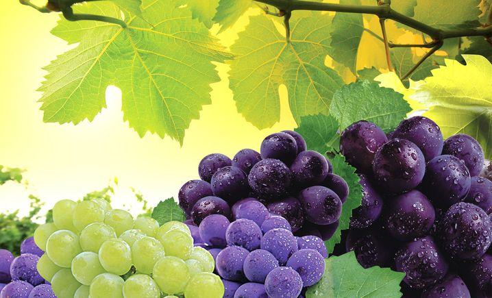 神农葡萄种植产业基地