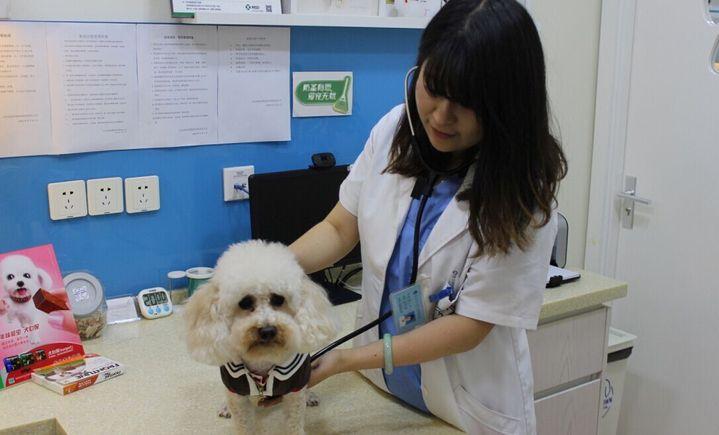 安然宠物医院
