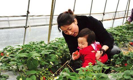 玲姐四方达草莓采摘园 - 大图
