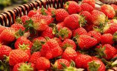 天然红草莓采摘园草莓4斤