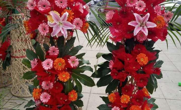 四季红鲜花