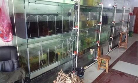 鱼艺水族馆