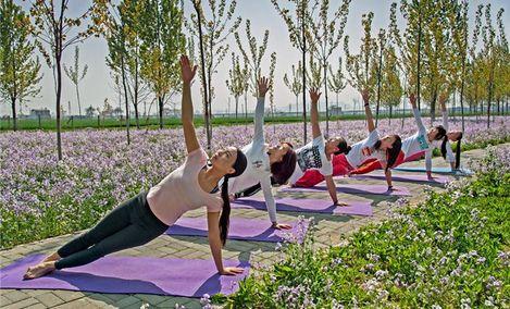 莫妮卡舞蹈瑜伽艺术中心