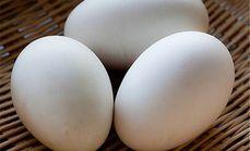红谷山庄蛋业