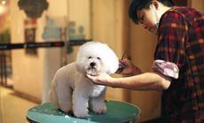 仁爱宠物诊所