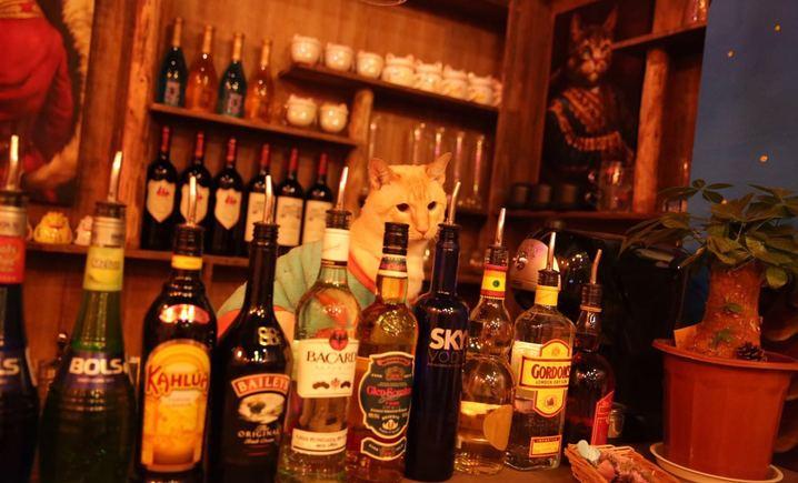 猫咪咖啡小酒馆