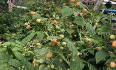 树莓合作社