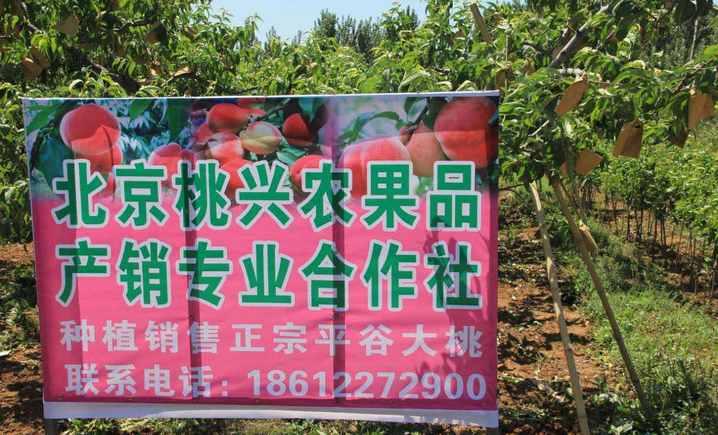 北京桃兴农果品产销专业合作社(平谷店) - 大图