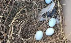 香果满园无公害绿皮柴鸡蛋