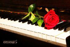 琴语琴愿钢琴体验课一次