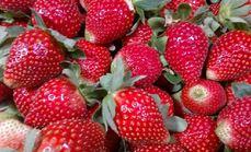 阳光草莓园
