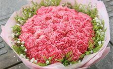 九州唯爱33朵康乃馨花束
