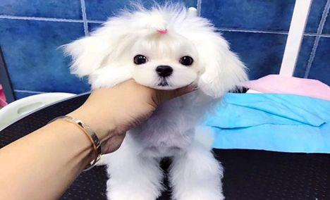 圣宠宠物丰科万达店 - 大图