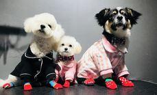 三只小狗宠物工作室