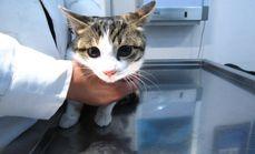 迪威德公猫去势套餐