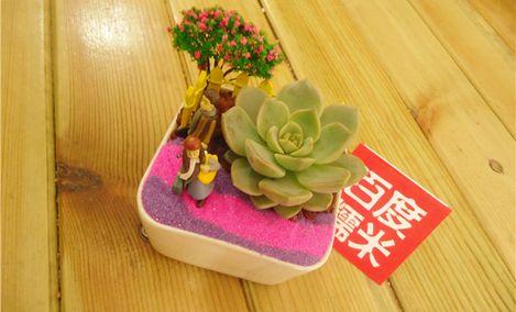 东山小仙多肉DIY植物馆