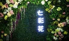 七彩花亲子儿童摄影