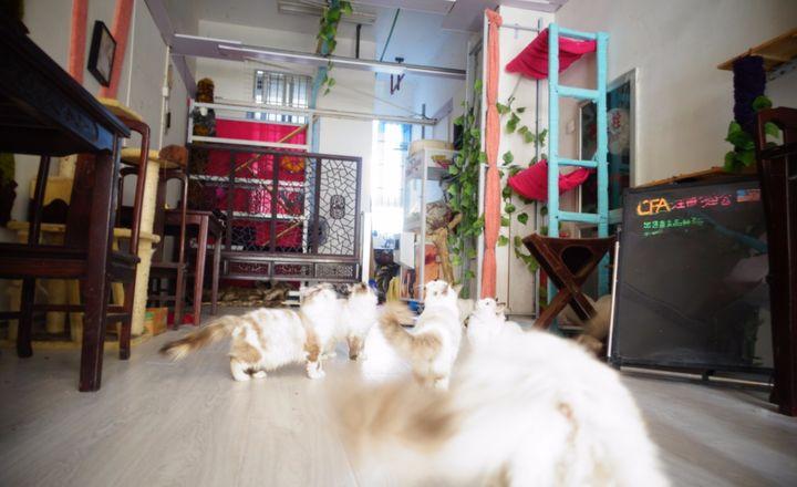 猫咪体验馆