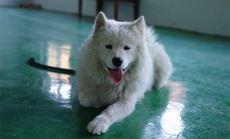 忠诚宠物宠物培训