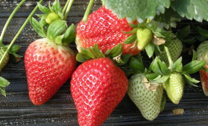 娟娟草莓园