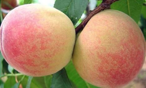 凤桥三星ABC水果
